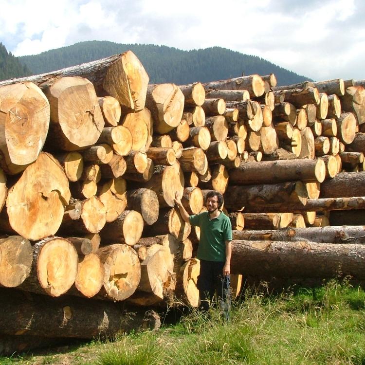 scelta-essenze-legno